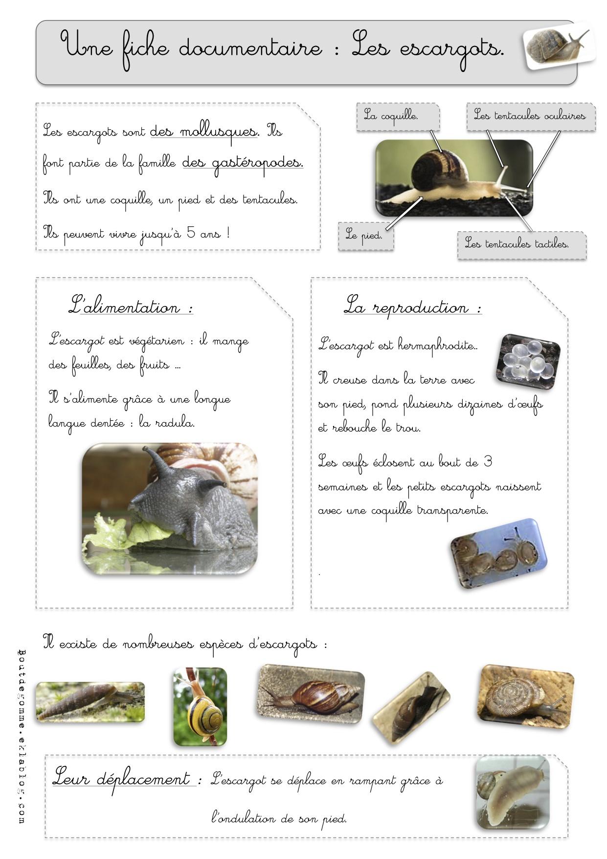 Extrêmement Sciences : Les escargots-observations | Bout de Gomme IJ65