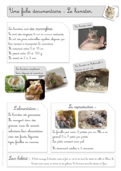"Rallye-lecture ""Hamsters"""