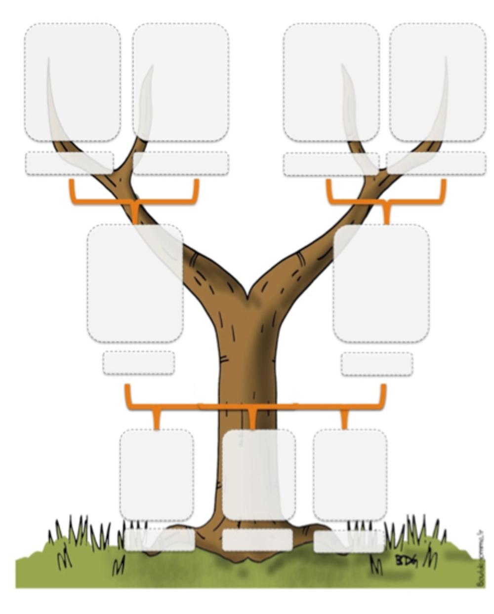 Ddm le temps l arbre g n alogique bout de gomme - Arbre genealogique dessin ...