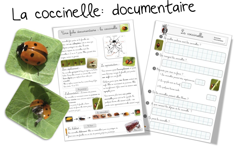 Souvent La coccinelle : Fiche documentaire | Bout de Gomme UZ54