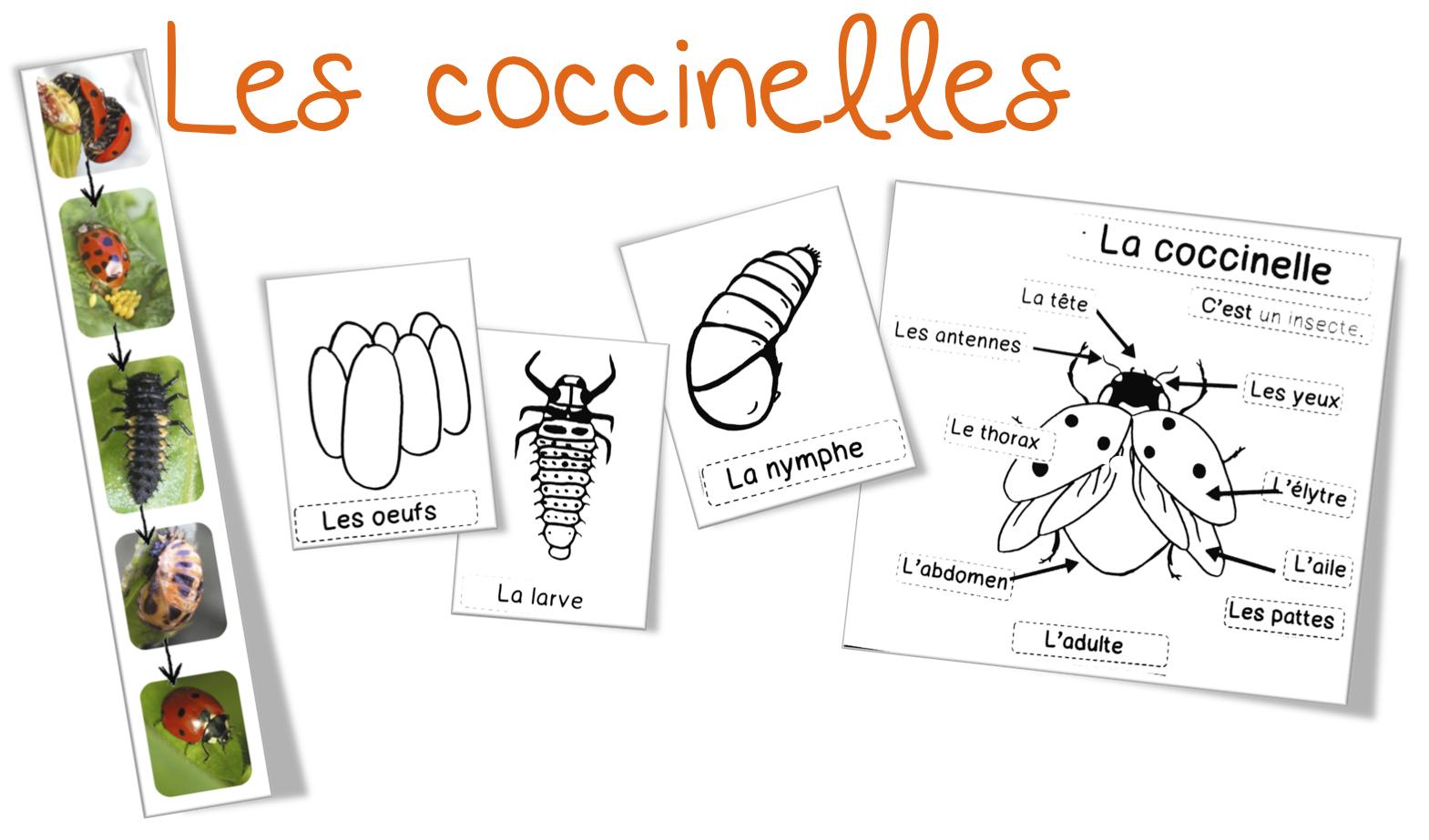 Souvent Sciences/Elevage : les coccinelles | Bout de Gomme UZ54